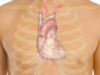 valvula-aortica-bicuspide